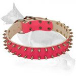 Pink Leather German Shepherd Collar with 2 Rows Nickel Plated Spikes