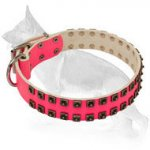 Pink Leather German Shepherd Collar with 2 Rows of Old Nickel Plated Square Studs