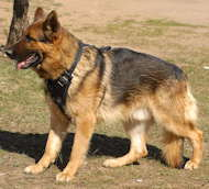 leather dog harness for german shepherd