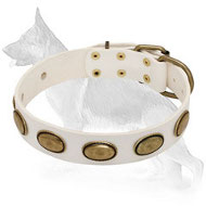 White Leather German Shepherd Collar with Brass Oval Plates