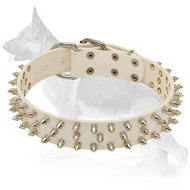 White Leather German Shepherd Collar with 3 Rows of Spikes
