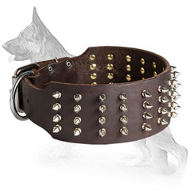 3 inch custom spiked collar for German Shepherd