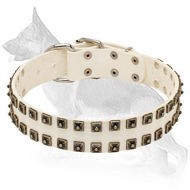 White Leather German Shepherd Collar with 2 Rows Old Nickel Plated Square Studs