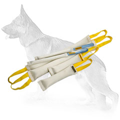 Fire Hose Dog Training Set