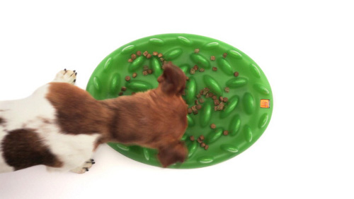 Interactive Dog Feeder for Slow Healthy Eating