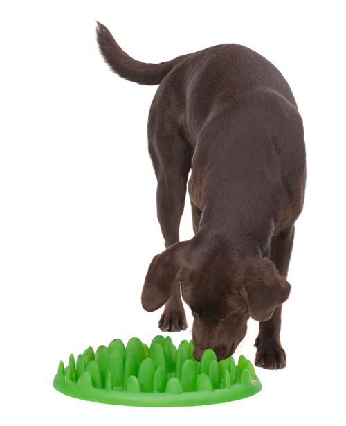 Plastic Grass Dog Feeder Intended for Big Breeds