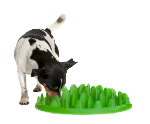 Plastic Grass Dog Feeder Intended for Small Breeds