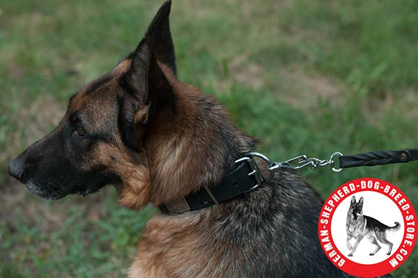 Fancy Leather German Shepherd Colar with Nickel-plated D-ring