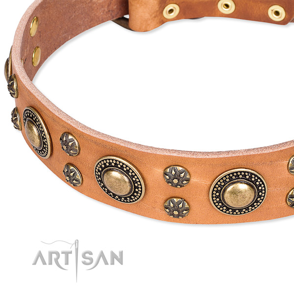 Leather dog collar with unusual studs