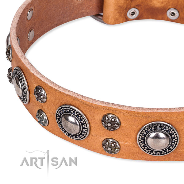 Stylish walking full grain leather collar with reliable buckle and D-ring