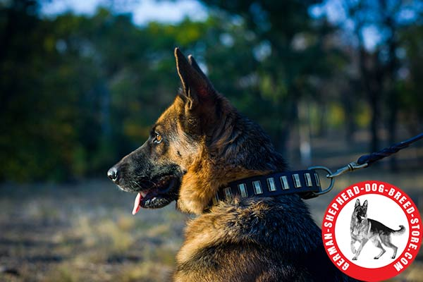 First-class Leather Decorated Collar for German Shepherd