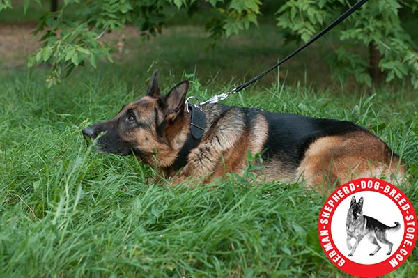 Everday Walking Leather Collar for German Shepherd