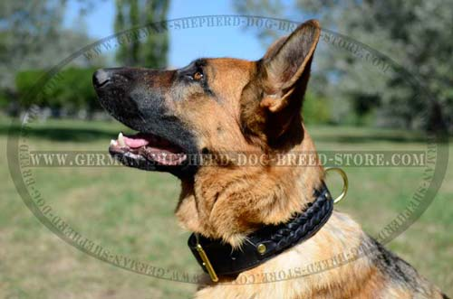 Studded German Shepherd Dog Collar