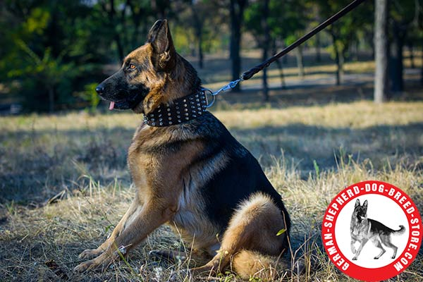 Extra Wide German Shepherd Collar 3 inch