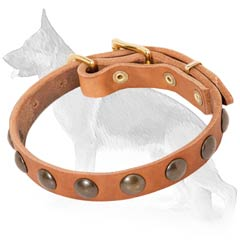 German Shepherd Collar with Brass Studs