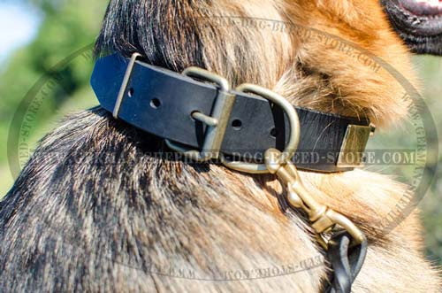 Buckled Leather German Shepherd Collar Mix of Brass Plates and Nickel Pyramids