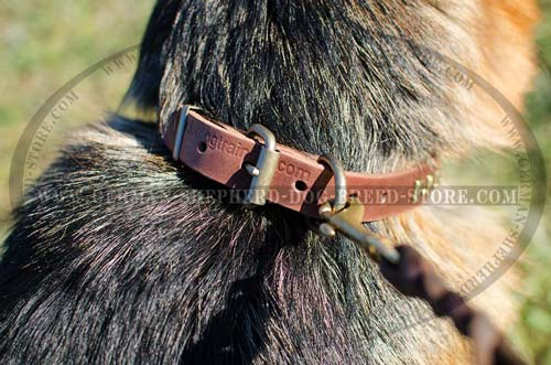 Buckled Studded Leather Dog Collar for German Shepherd
