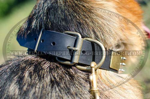Decorated Leather German Shepherd Collar with Massive Brass Plates and Nickel Plated Pyramids between Spikes