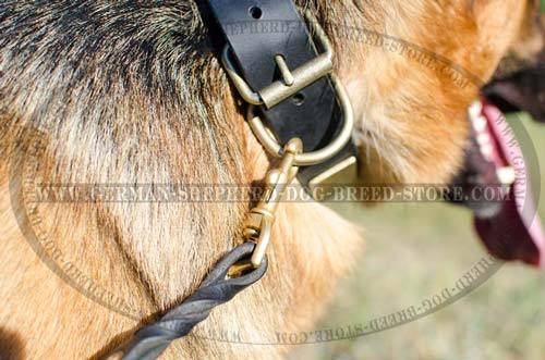 Buckled Leather German Shepherd Collar with Massive Brass Plates