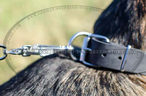 Buckled Leather German Shepherd Collar with Strong Ring