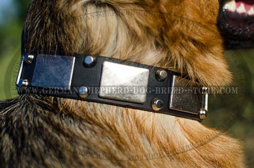 Leather German Shepherd Collar Decorated with Mix of Nickel Coated Plates and Pyramids