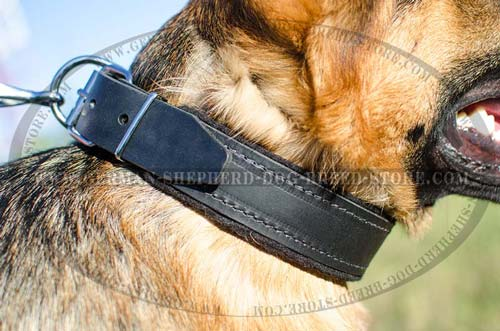 40 mm Wide Felt Padded Leather Dog Collar for German Shepherd
