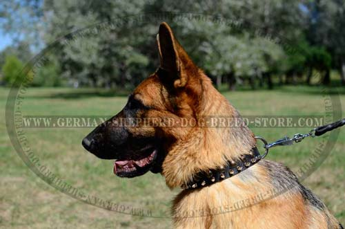 German Shepherd Collar Leather Fashionable