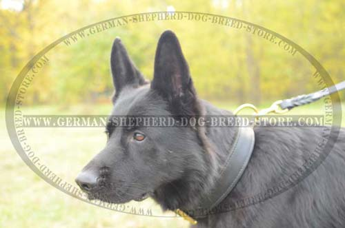 German Shepherd Collar Leather Extra Durable