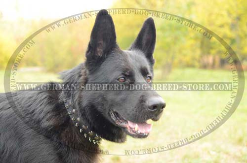 German Shepherd Collar Leather Strong