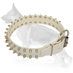 Spiked White Leather German Shepherd Collar with Nickel Plated Fittings