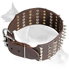 Buckled Wide Leather German Shepherd Collar Decorated in 5 Rows