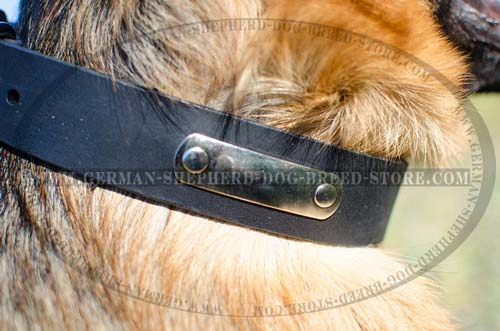 Identificating German Shepherd Collar Leather with Tag