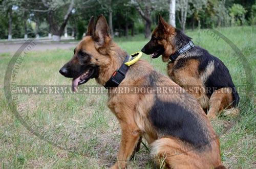 German Shepherd Collar Nylon Durable