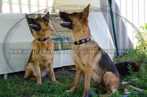 German Shepherd Collar Nylon Amazing
