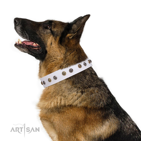 Everyday walking studded dog collar made of strong natural leather