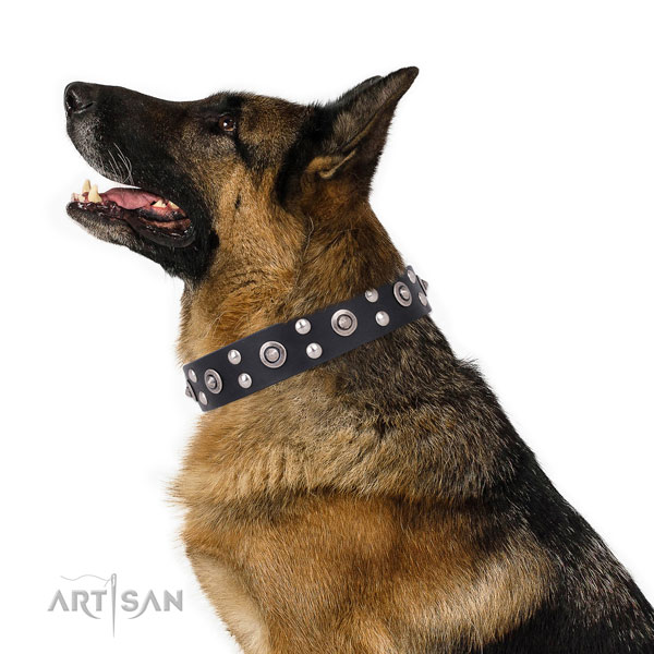 Daily use decorated dog collar made of best quality leather