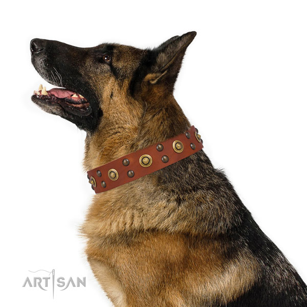 Daily use dog collar with exquisite adornments