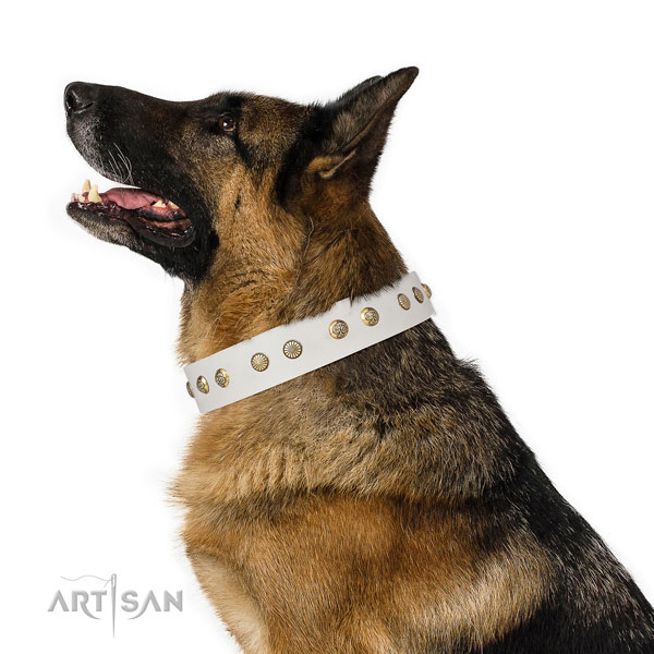 Impressive adornments on stylish walking full grain leather dog collar