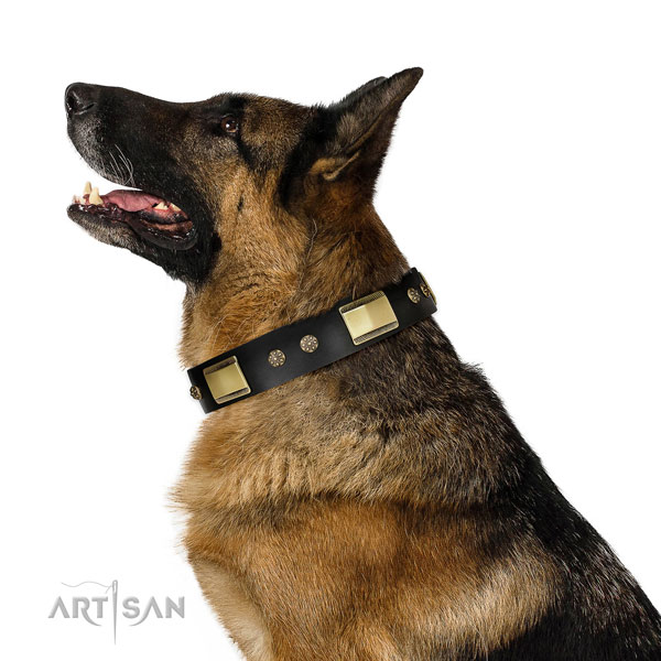 Daily use dog collar of natural leather with impressive adornments