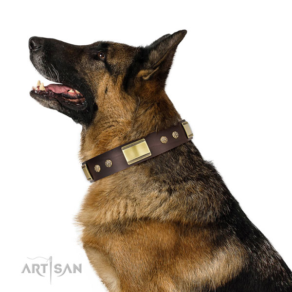 Fancy walking dog collar of leather with stylish design decorations