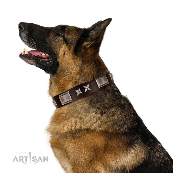 Impressive collar of leather for your stylish pet