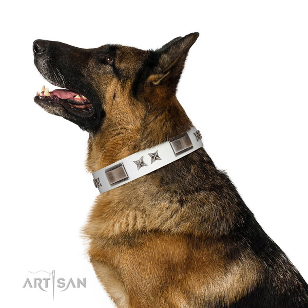 Incredible collar of full grain natural leather for your beautiful doggie