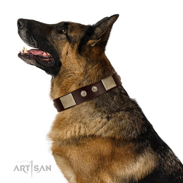 Corrosion proof D-ring on full grain leather dog collar for daily use