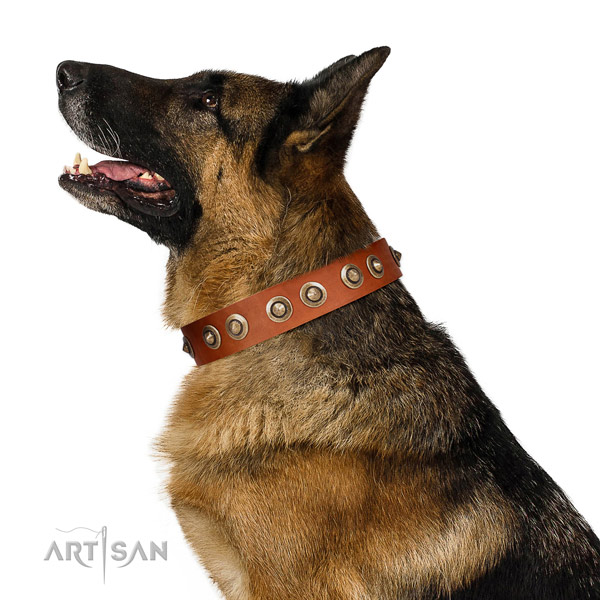 Comfortable wearing dog collar of natural leather with top notch embellishments