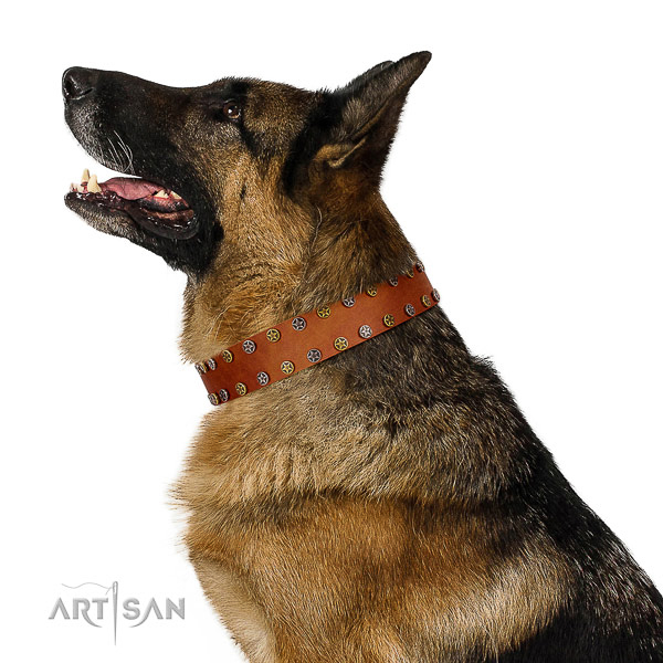 Everyday walking quality genuine leather dog collar with studs