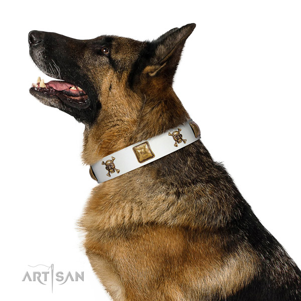Impressive natural leather dog collar with corrosion resistant decorations