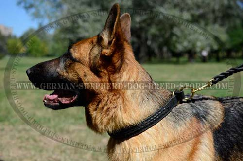 Amazing German Shepherd Dog Collar