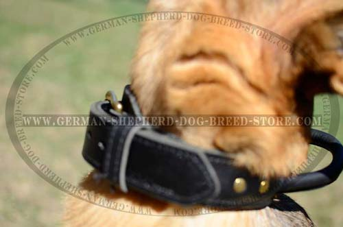 German Shepherd Dog Collar With Brass Fittings