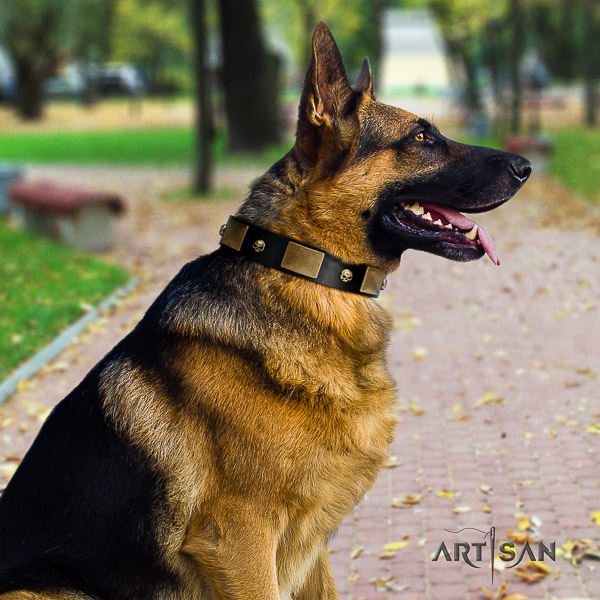 German Shepherd Dog significant adorned leather dog collar