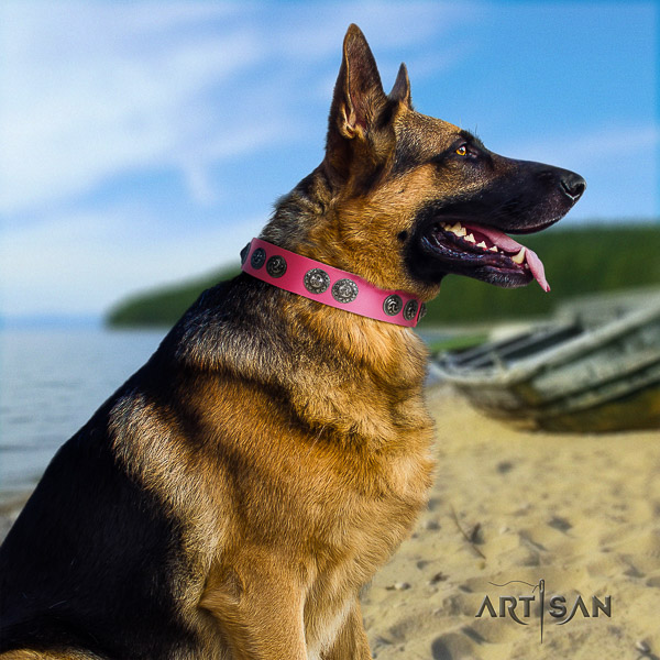 German Shepherd Dog trendy adorned full grain natural leather dog collar for everyday walking